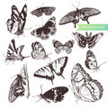 Butterfly set. Royalty Free Stock Image