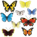 Butterfly set Stock Photography