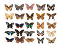 Butterfly set collection Stock Images
