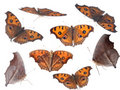 Butterfly set collection Stock Image