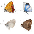 Butterfly side view collection isolated Royalty Free Stock Images