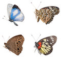 Butterfly side view collection isolated Stock Photography