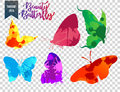 Butterfly silhouettes splash and butterfly colorful splash on transparent background.
