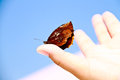 Butterfly sitting on the thumb against a blue sky Royalty Free Stock Photo