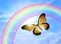 Butterfly sky rainbow a with a Stock Photos