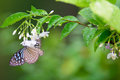 The butterfly smell flowers Royalty Free Stock Photo