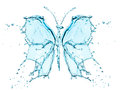 Butterfly splashing water isolated on a white background Royalty Free Stock Photo