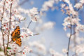 Butterfly on spring flowers Royalty Free Stock Photography