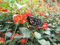 Butterfly in a sunny summer garden with black and yellow wings Royalty Free Stock Photo