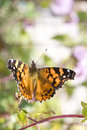 Butterfly taking flight Royalty Free Stock Photo