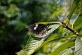 Butterfly at tiergarten zoo nuremberg germany Stock Photo