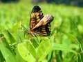 Butterfly in Tikal Stock Photography
