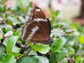 Butterfly on tree Royalty Free Stock Photo