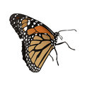 Butterfly vector illustration of a Stock Images