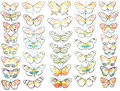 Butterfly Vectors on White Background