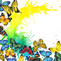 Butterfly and watercolor splash background