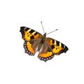 Butterfly on white background Royalty Free Stock Photo