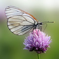 Butterfly white sitting on a flower blur closeup Stock Images