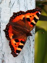 Butterfly on wooden fence old painted Royalty Free Stock Photo