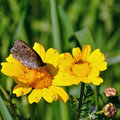 Butterfly on yellow flower feeding nectar spring background Stock Image