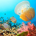 Butterflyfishes and jellyfish Stock Images