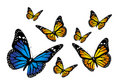 Butterflys Royalty Free Stock Photos