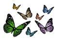 Butterflys Royalty Free Stock Photo