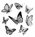 Butterflys with open wings illustration Stock Photo