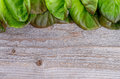 Butterhead lettuce frame of fresh crunchy green and red closeup on rustic wooden background Stock Image
