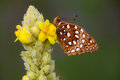 Buttery fly on a flower butterfly resting in meadow Royalty Free Stock Photo