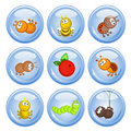 Buttons insect Royalty Free Stock Photo