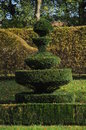 Buxus sempervirens common box topinaries these are some of the which stand in the garden of the beautiful castle of cormatin in Royalty Free Stock Photos