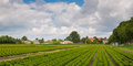 Buxus tree nursery in the Netherlands Stock Photography