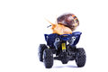 Bye bye a snail riding a toy quad model looking back Royalty Free Stock Photos