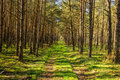 Bypath through dense forest foot path Stock Photography