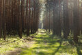 Bypath through forest with green grass and sun light Stock Image