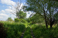 Bypath through meadow small field lined with high grass Royalty Free Stock Images