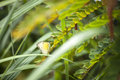 Cabbage butterfly pieridae in the grass park Royalty Free Stock Photos