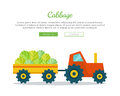 Cabbage Farm Web Vector Banner in Flat Design.