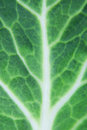 Cabbage green leaf of close up Stock Photo