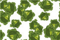 Cabbage seamless pattern on white