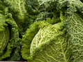 Cabbages Stock Images