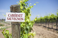 Cabernet sauvignon sign on vineyard post at the end of a row of grapes Royalty Free Stock Photography