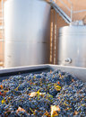 Cabernet sauvignon vinemaking with grapes and tanks fermentation stainless steel vessels Royalty Free Stock Photo