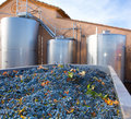 Cabernet sauvignon winemaking with grapes and tanks fermentation stainless steel vessels Royalty Free Stock Photo