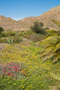 Cabo de gata at springtime natural park spain Stock Images