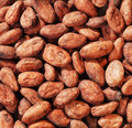 Cacao Beans Royalty Free Stock Photos