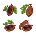 Cacao beans set vector this is file of eps format Stock Photo