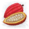 Cacao pod opened Stock Photography
