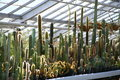 Cacti backlit greenhouse summer succulents Stock Photo